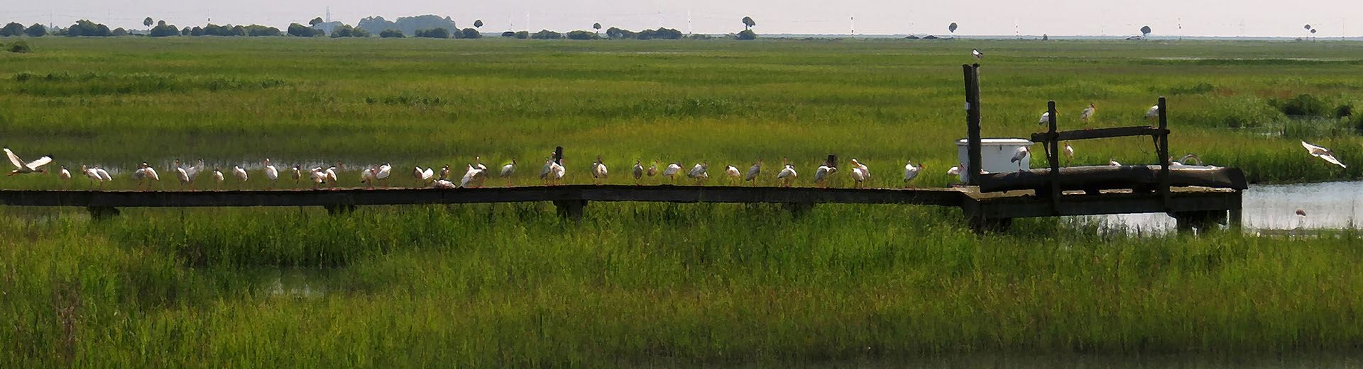 salt marsh neighbors